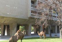 Unitè d'Habitation Marsiglia / Università Paderno Dugnano - Storia dell'Architettura