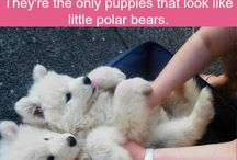 cute animals I can't resist pinning