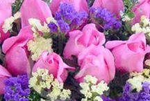 Felicitari de 1 Mai / Felicitari de 1 Mai: trimiteti felicitari de 1 Mai virtuale. Acesta este un serviciu gratuit, simplu si original!