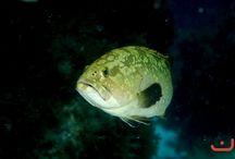 Onderwaterbeelden
