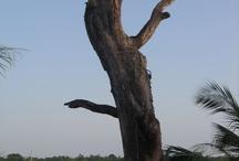 My Guinea Bissau / www.investingb.blogspot.com #guineabissau #guinebissau #guineebissau
