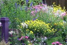 B's new garden summer 2016