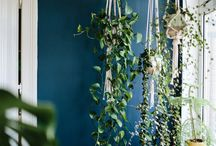 INSPIRATION: Houseplants in interior decorating