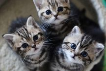 Cats and Kittens / by Cindy Hardy