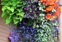 kvety pre závesy