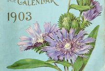 Pretty seed packets