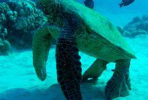 OCEANblue / Water life