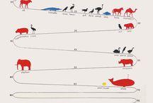 Animals infographics
