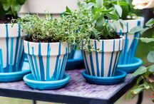 Gardening herbs and tips