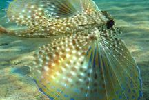 Sea life and Waterworld / My Lord is the creator of all this beauty.