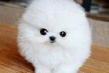 perritos / Aquí dejo los perritos más tiernos ♥️