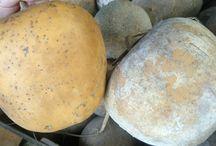 Gourds / by Heather Podeszwa