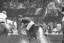 Polo / by Kim Clinton