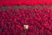 Fiorifiorellini  / Flowers' images