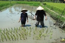 Magical Vietnam / All about travelling in Vietnam