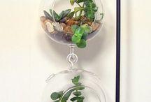 Support plante de Grasse