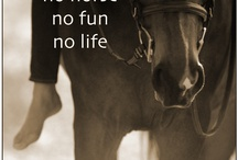 Paardenquotes