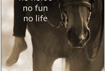 Paarden
