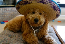 ...with a Sombrero! / Images of all kinds of animals, people and objects...with a Sombrero! Why are Sombreros funny? I DON'T KNOW!! / by PixieAngelo
