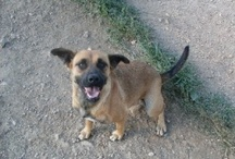 Pet Rescue and Adoption