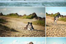 cool dog pics