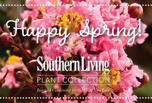 Spring 2015 / Spring 2015 / by Southern Living Plant Collection