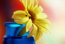 Yellow and Blue  awww / by Renata Marie Anselmo