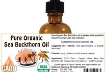 SeaBuckthorn Oil / Sea Buckthorn oil is packed with wonderful bioactive compounds and nutrients.