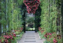 Home - Garden, Backyard & Greenhouse
