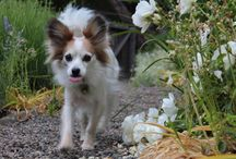 Gardens for pets / Pets in the garden