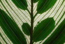 Textures, Patterns & Fabrics
