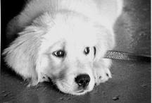 Dogs / by Dawn Probst
