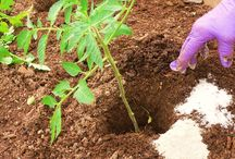 Gardening / Outside Stuff