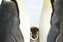 Imágenes de pingüinos