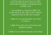 Info Dog