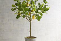 Lemon tree water sculpture
