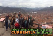 Ecotours / Lots of photos and stories from SAVE THE FROGS! Ecotours, which take place in beautiful tropical countries around the world!