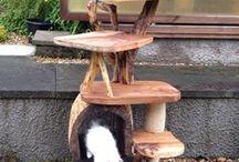 CATS!! / by Amanda Joseph