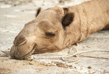 Cutest sleeping animals / A collection of animals snoozing and lounging.
