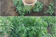 VEDGETABLE GARDEN : HOW TO