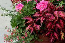 Büyük bahçe saksıları- / Container garden