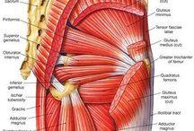 Hip strengthening