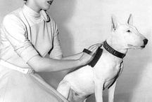 historie psí