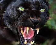 Black Cat Company / Life & business coaching, szkolenia, doradztwo zawodowe. www.blackcatcompany.pl
