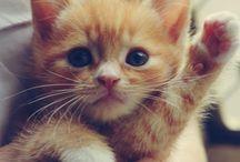 A N I M A L S / Cute animals that make my heart meeeelllltttt!