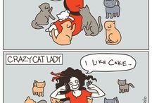 cat craze