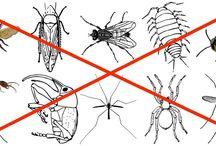 contra plagas