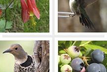 for the Birds ✿ / - Information and resources for our wild feathered friends -