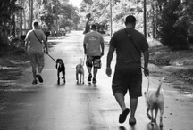 Our Warrior Teams / Our K9 for Warrior Teams One Canine One Warrior at a Time / by K9s for Warriors