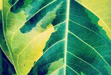 Folhas | Leaf
